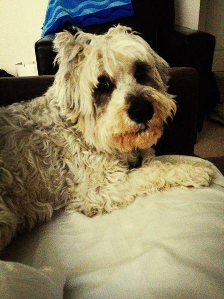 Charles ♥️ Dog Awkard Love ♥