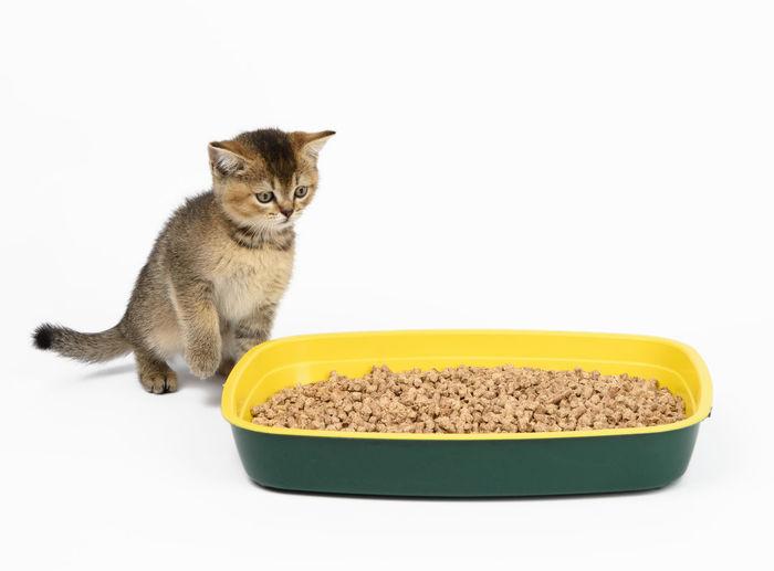 Cat sitting in a bowl