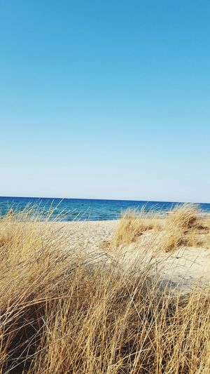 Beach Sea Sand Nature Scenics Horizon Over Water Outdoors Water Day Sky Clear Sky Sunny Tranquility Blue Sand Dune Tranquil Scene Travel Destinations Vacations No People Beauty In Nature Wilde Wildlife Wildlife Photography Sauvage Style