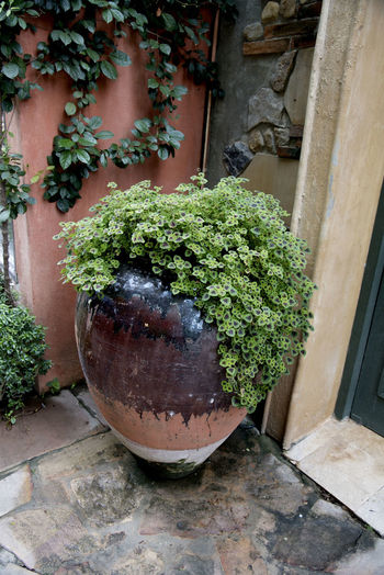 plant in a pottery water jar in an old classic building on a local street Pottery Art Pottery Water Jar Garden Tools Plant Classic Building Local Old Building Exterior