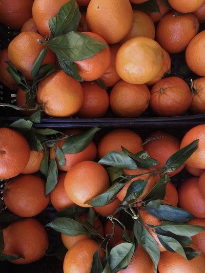 Oranges season 🍊 Orange Color Fruit Backgrounds Full Frame Citrus Fruit Leaf Close-up Food And Drink Orange - Fruit Peel Tangerine Blood Orange Juicy Vitamin C Farmer Market Raw Food Ripe Orange Tree Fruit Bowl