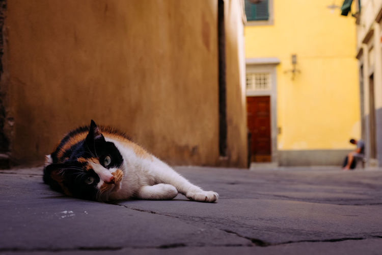 Cat in Lucca