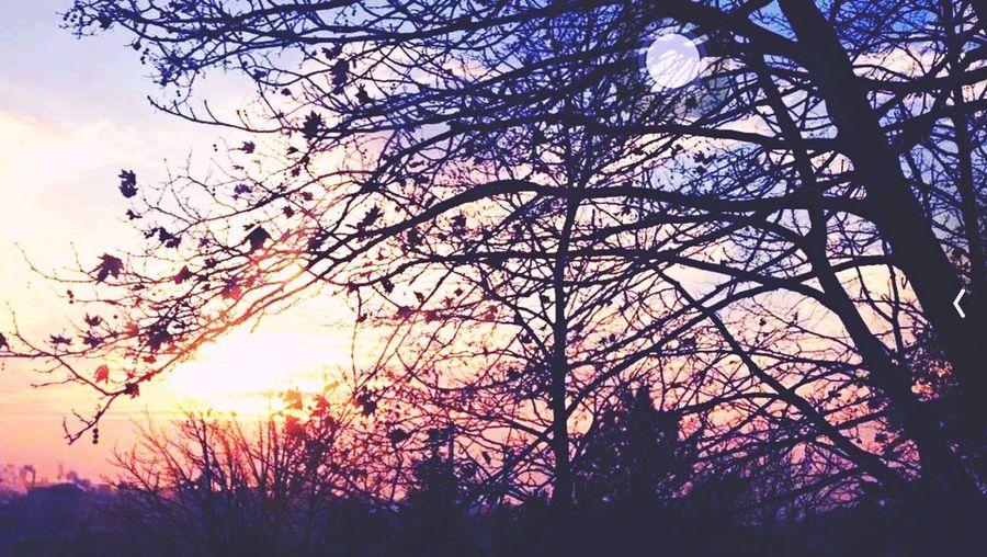 Günbatımı Sunsets Hello World EyeEm Nature Lover EyeEmBestPics Trees Muhterika Naturelovers Likeforlike