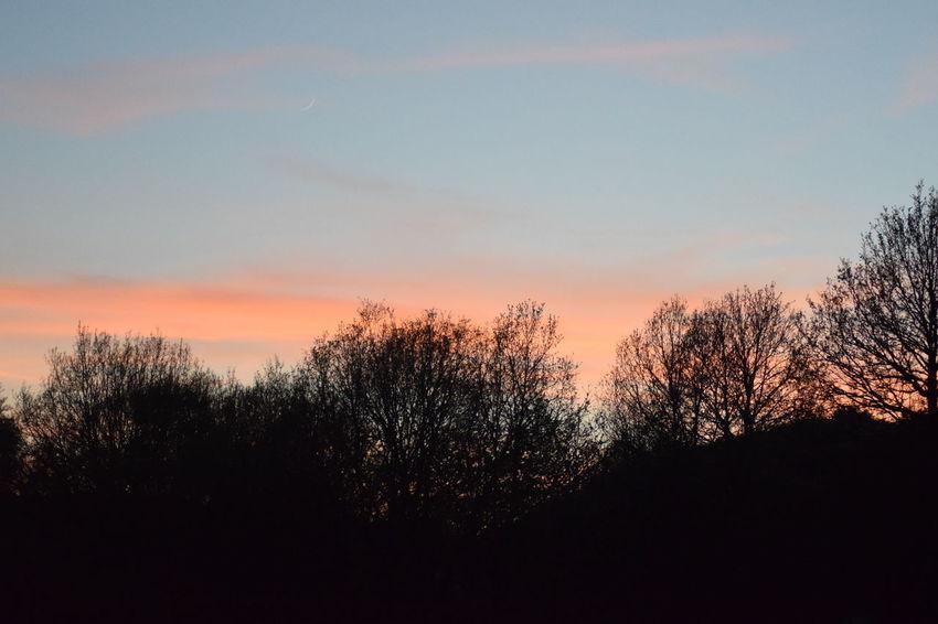 19.04.2018 April April2018 Beauty In Nature Cloud - Sky Landscape Nature No People Plant Scenics - Nature Sky Sunset Tree