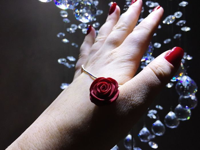Close-up of human hand holding rose