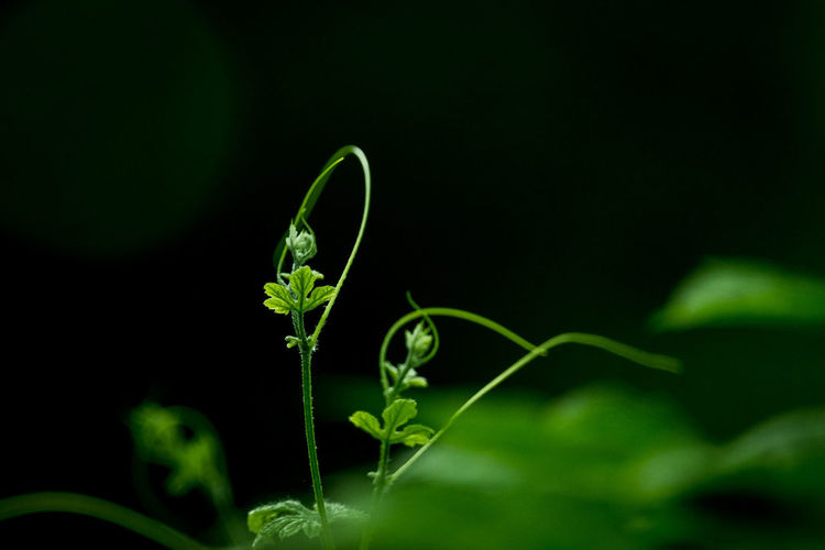 Dance of plant.
