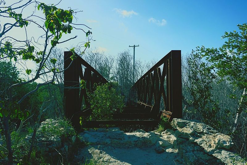 Sony A6000 Sonyalpha Sonycamera Sonymirrorless Mirrorless Daytime Outdoors Taking Photos Guanica, PR Puerto Rico Old Architecture Old Bridge Broken Bridge Eyemphotography Eyem Gallery Weathered Old Ruin Old But Awesome Forest Forestwalk