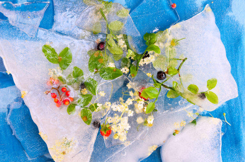 Close-up of flowers with cherries in ice
