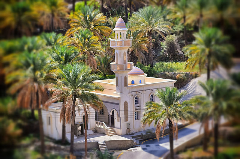 Mosque trees Day No People Traditional Culture LandscapesEyeEmNewHere