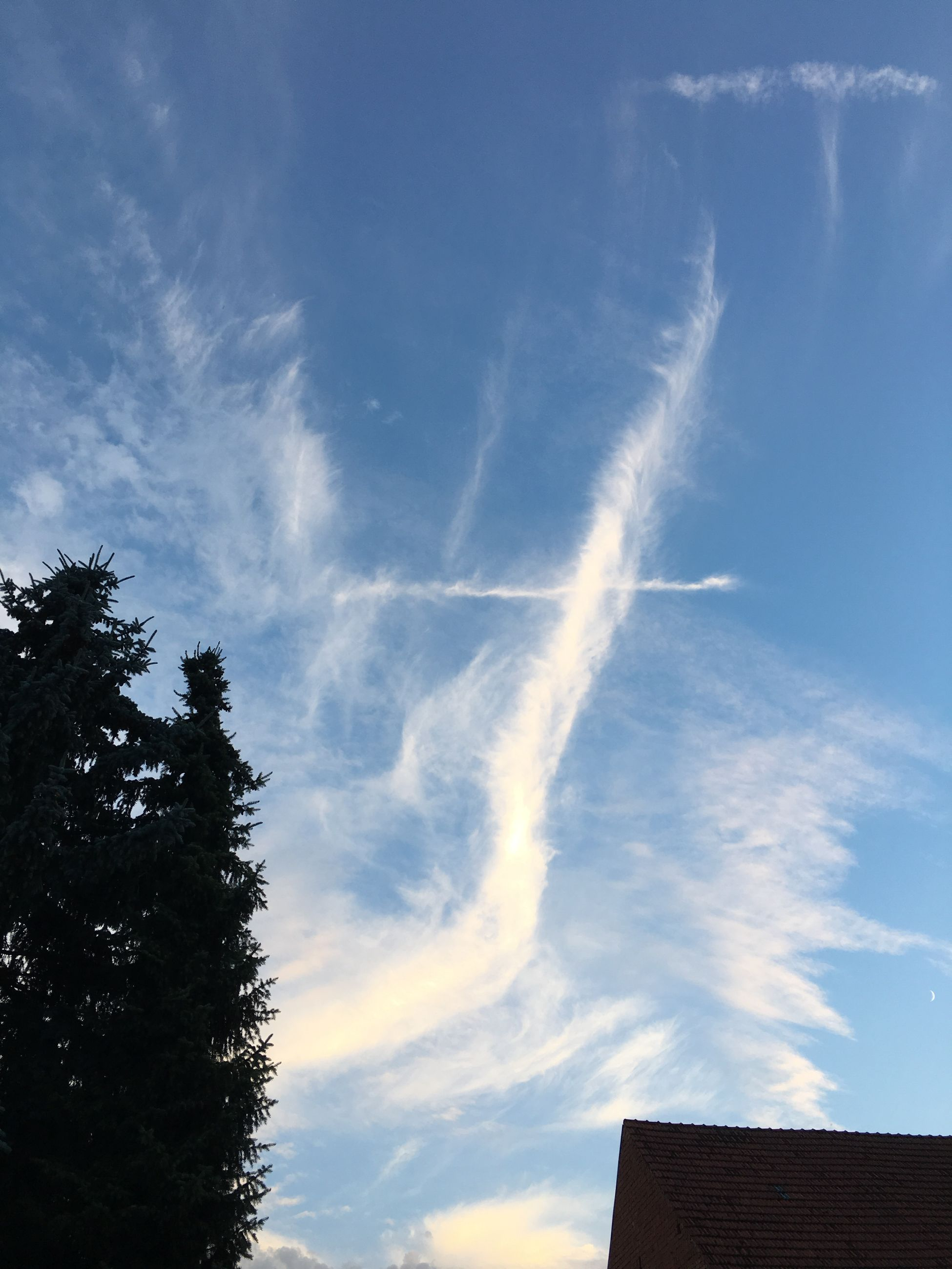 vapor trail, sky, contrail, scenics, nature, low angle view, beauty in nature, no people, outdoors, tree, day
