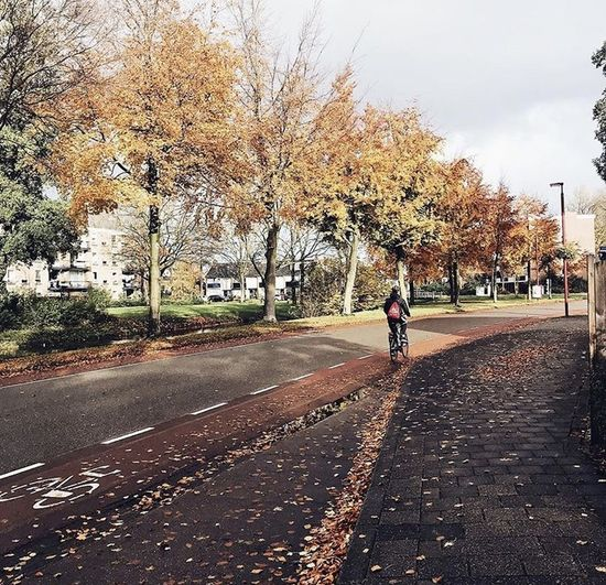 Man riding bicycle on road in city during autumn