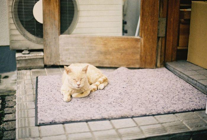 Kodak Portra Tokyo Streetphotography Cat