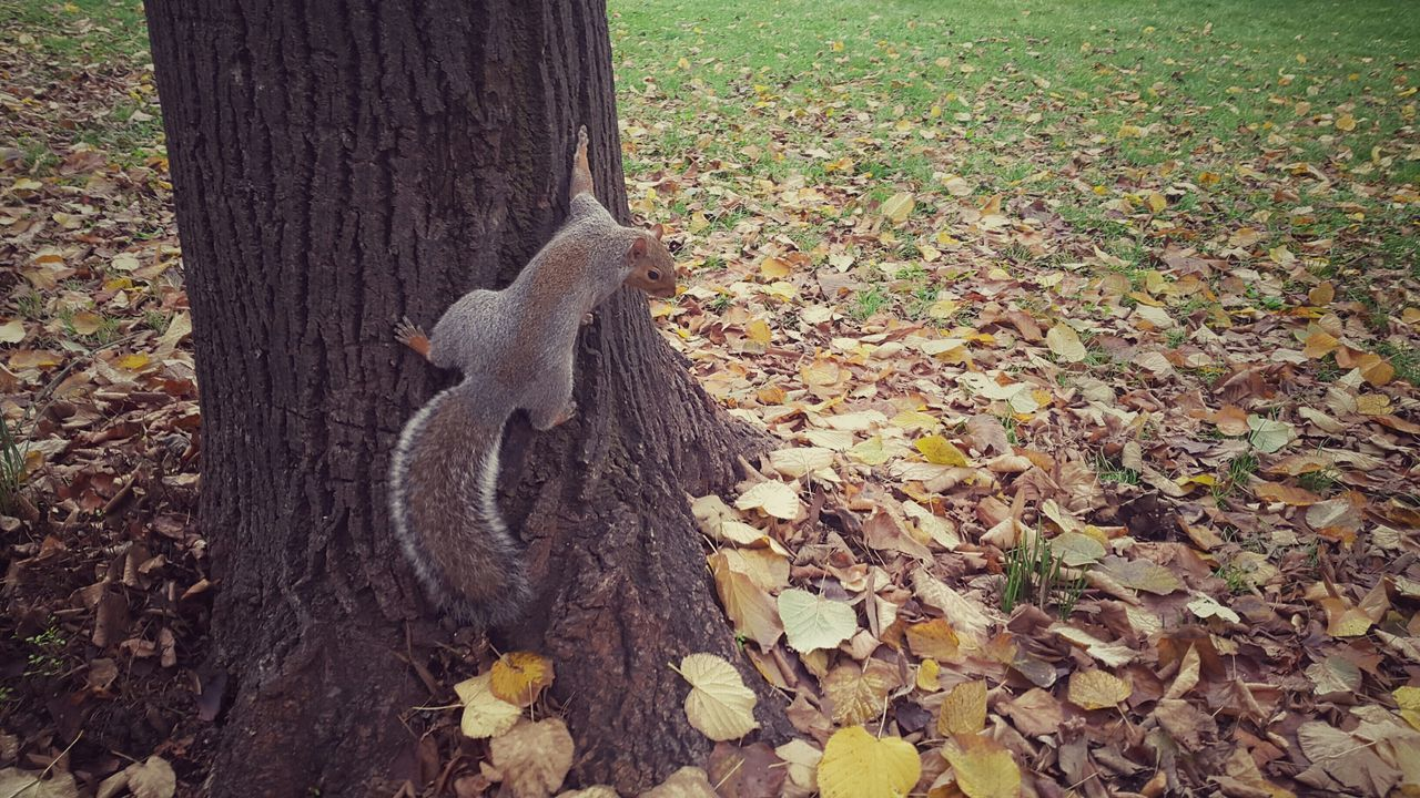 High Angle View Of Squirrel On Tree Trunk At Park