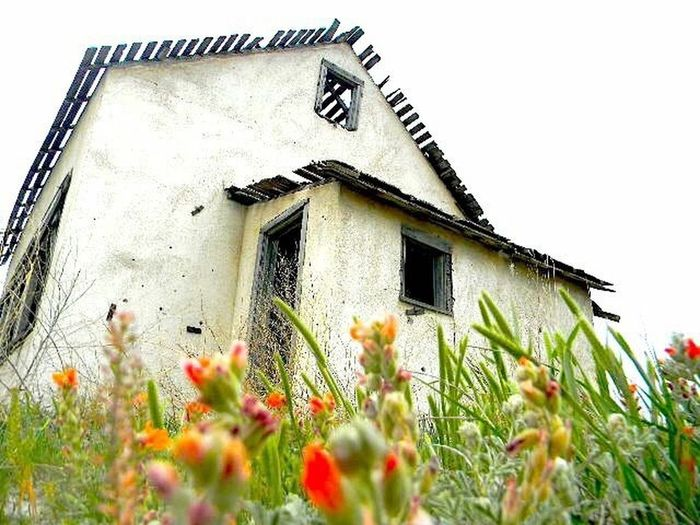 Old house in Kansas EyeEmNewHere Flower Building Exterior Built Structure Low Angle View House Nature Outdoors