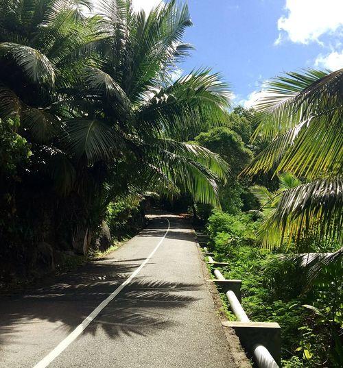 Takamaka road Jungle Road EyeEmNewHere Seychelles Islands Beautiful Road Beach Road Plant Tree Direction The Way Forward Nature Growth Sunlight