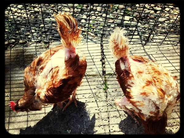 Elsie and Hilda settling into their new home