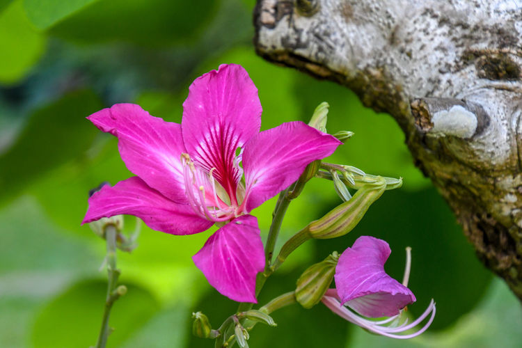 Beauty In Nature Close-up Day Flower Flower Head Flowering Plant Focus On Foreground Fragility Freshness Growth Inflorescence Leaf Nature No People Petal Pink Color Plant Plant Part Pollen Purple Vulnerability