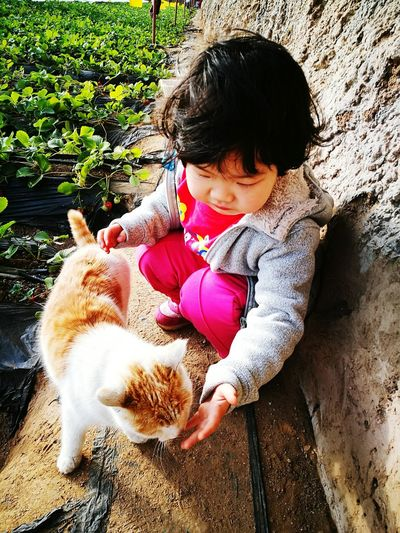 High angle view of girl playing with cat by field