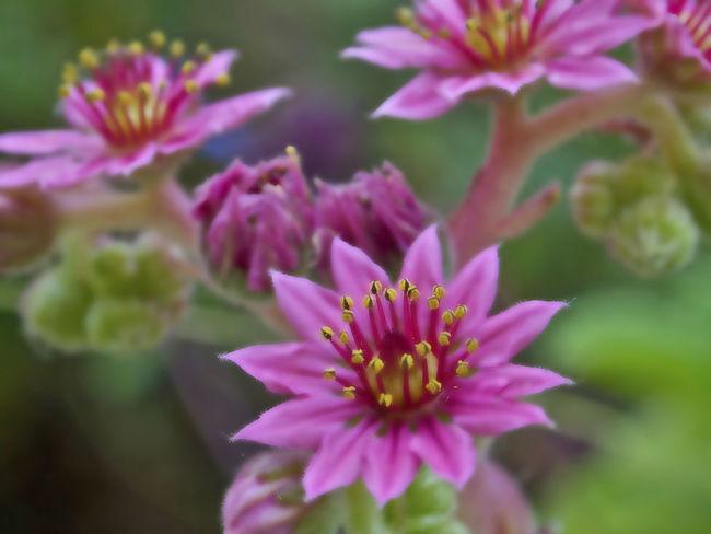 Blooming Botany Depth Of Field EyeEm Nature Lover Flower Gerhard Richter Petal Pink Color