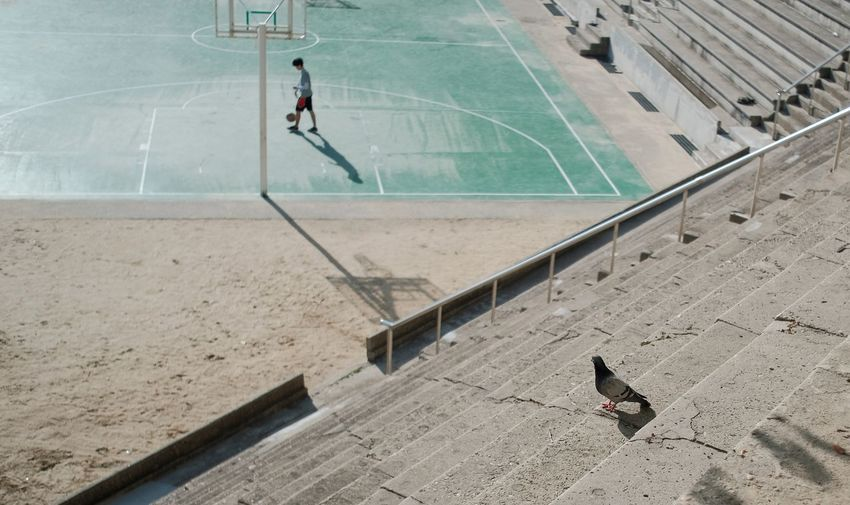 High Angle View Of Pigeon On Steps Against Basketball Court