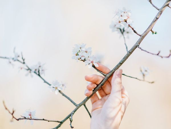 It's finally Spring Time!!! Beauty In Nature Branch Close-up Cropped Day Flower Focus On Foreground Fragility Growth Hands Holding Human Finger Lifestyles Nature Outdoors Part Of Person Plant Selective Focus Sky Spring Springtime Stem Twig Unrecognizable Person