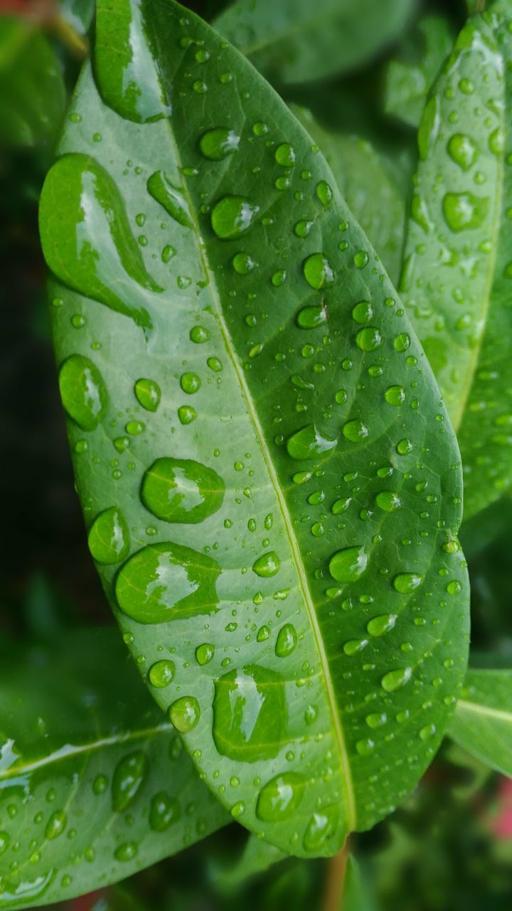 drop, leaf, water, wet, green color, close-up, raindrop, rain, freshness, nature, droplet, water drop, weather, day, growth, no people, focus on foreground, outdoors, fragility, beauty in nature, plant, purity