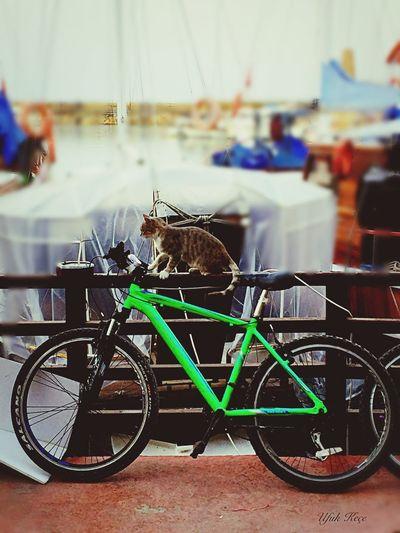 Bicycle And Cat Amazing Enjoyinglife  Open Edit Girne/ Kıbrıs