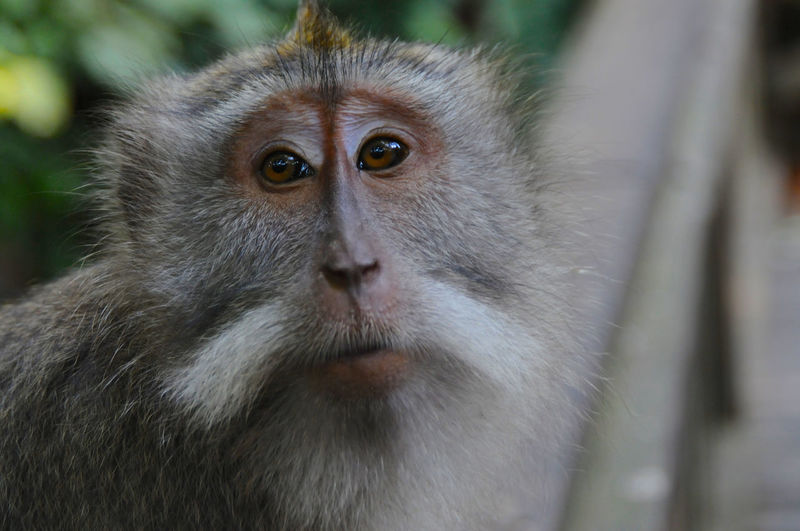 Close-up of monkey looking away in zoo