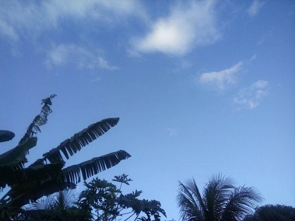 Sobre amar o céu limpo e claro! Day Nature Sky Blue Love Lindo  Deslumbrante Lindo  Photographer Low Angle View Tree No People Silhouette Outdoors