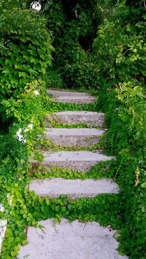 Gardens Stairs Stairways Efeu Bewachsene Treppe Green Green Green!  Stone Steps Garden Photography Stone Stairs Fairy Trail Treppen Stairs Escaleras Stairway Magician Elvenpath
