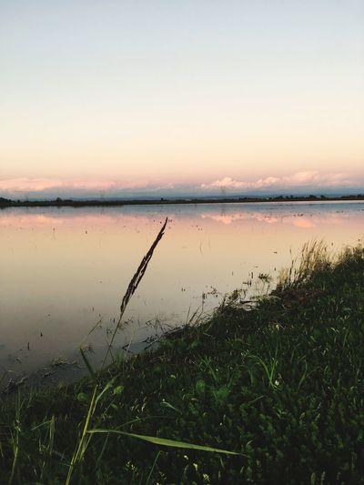 Wetlands Reflection Water Lake Grass