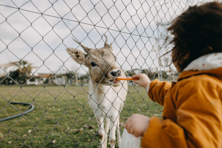 Rear view of child feeding doe