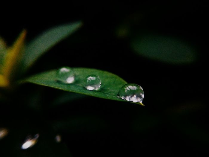 Water Droplets Freshness Beauty In Nature Nature Green Color Water Droplets On Leaves Selective Focus Water Drops On Grass Rain Drops On Leaves Save Water Save Earth EyeEm Team Likeforlikers Likes4likes Freshness Beauty In Nature Nature Leaf The Week On EyeEm