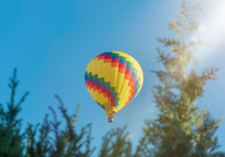 A colorful hot air balloon hovers in the blue sky. branches of coniferous trees.