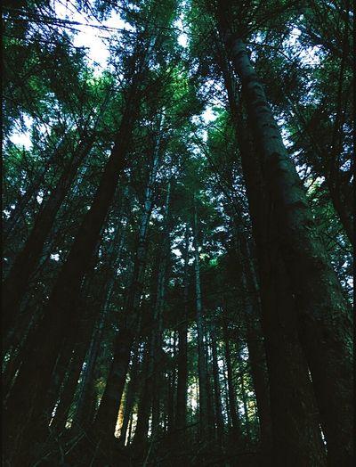 New Zealand woods Feel The Journey Newzealand Adventure Travel Photography