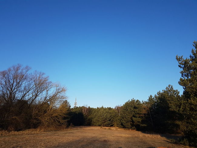 Samsungphotography Galaxy S7 Nature Photography Wiese  Frost Kälte Tree Blue No People Sky Day Outdoors Nature Clear Sky Beauty In Nature