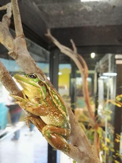Frog Animal