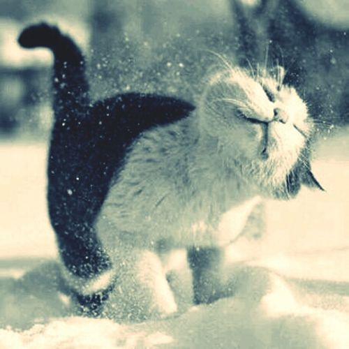 sweet cat snow schnee katze winter eis Cat Sweet Winter Katze Schnee