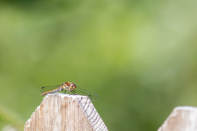 Beauty In Nature Close-up Countryside Day Dragonfly Nature No People Outdoors Selective Focus Sweden Wood - Material