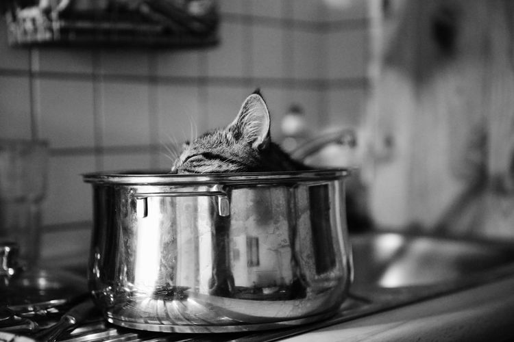Animal Themes Focus On Foreground Indoors  Kater Kitchen Kuchen No People Pet S/w Still Life Trzoska