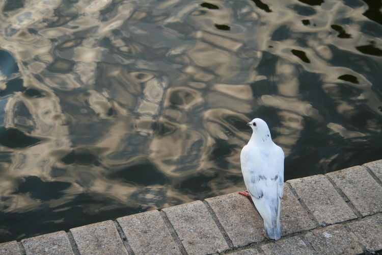 High angle view of seagull perching on a lake