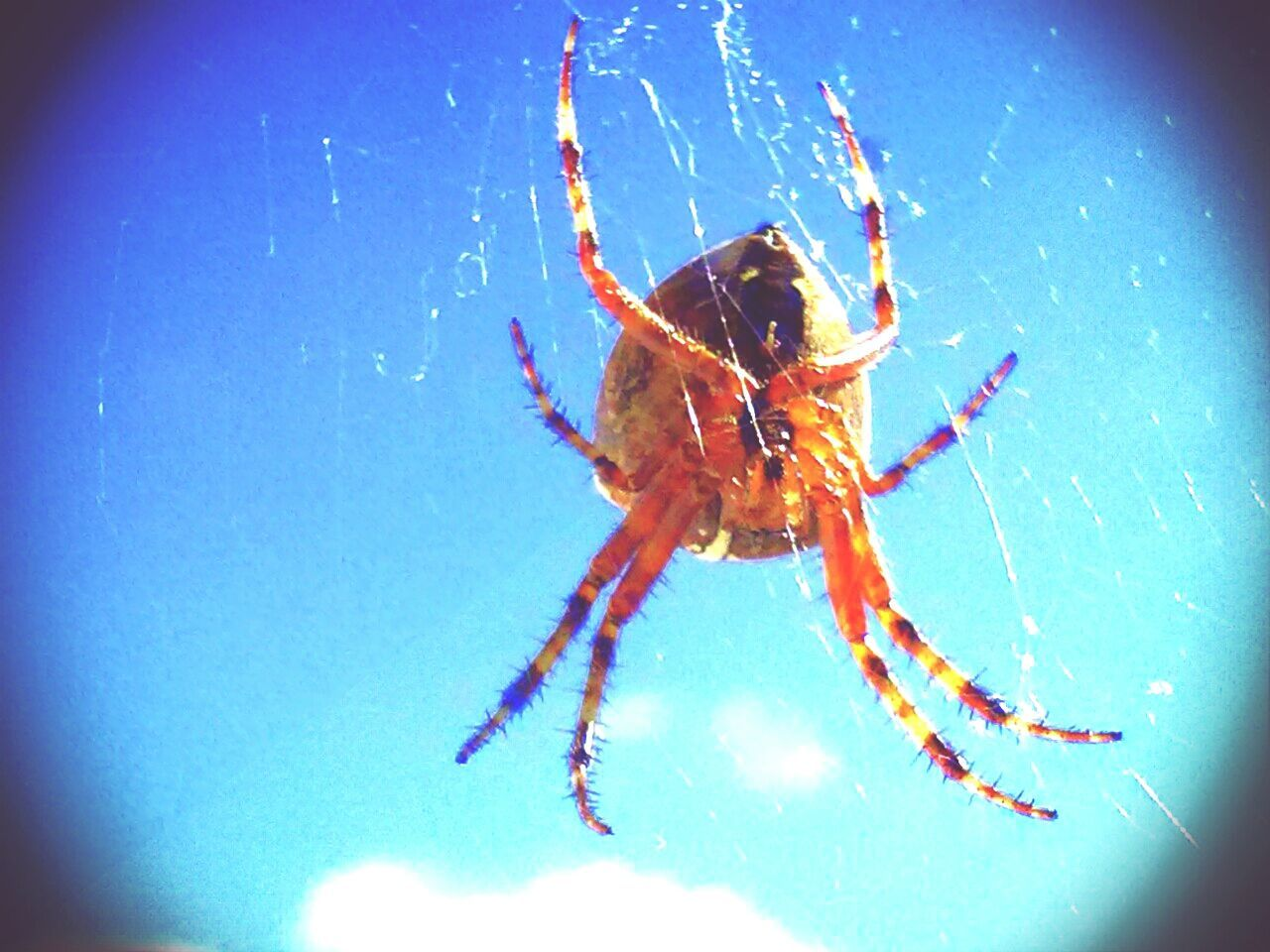 one animal, spider, animal themes, animals in the wild, spider web, animal leg, animal wildlife, no people, outdoors, day, close-up, nature