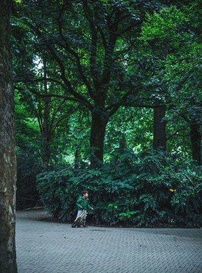 Davide/Golia Tree Full Length Woods Treelined Empty Road WoodLand