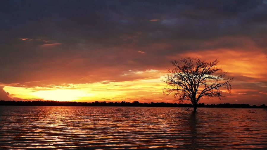 sunset @บึงแท่น Sunset Sky Tranquility Outdoors Tree Reflection Nature Beauty In Nature Silhouette Scenics Landscape Cloud - Sky Sea Water No People Horizon Over Water City Day