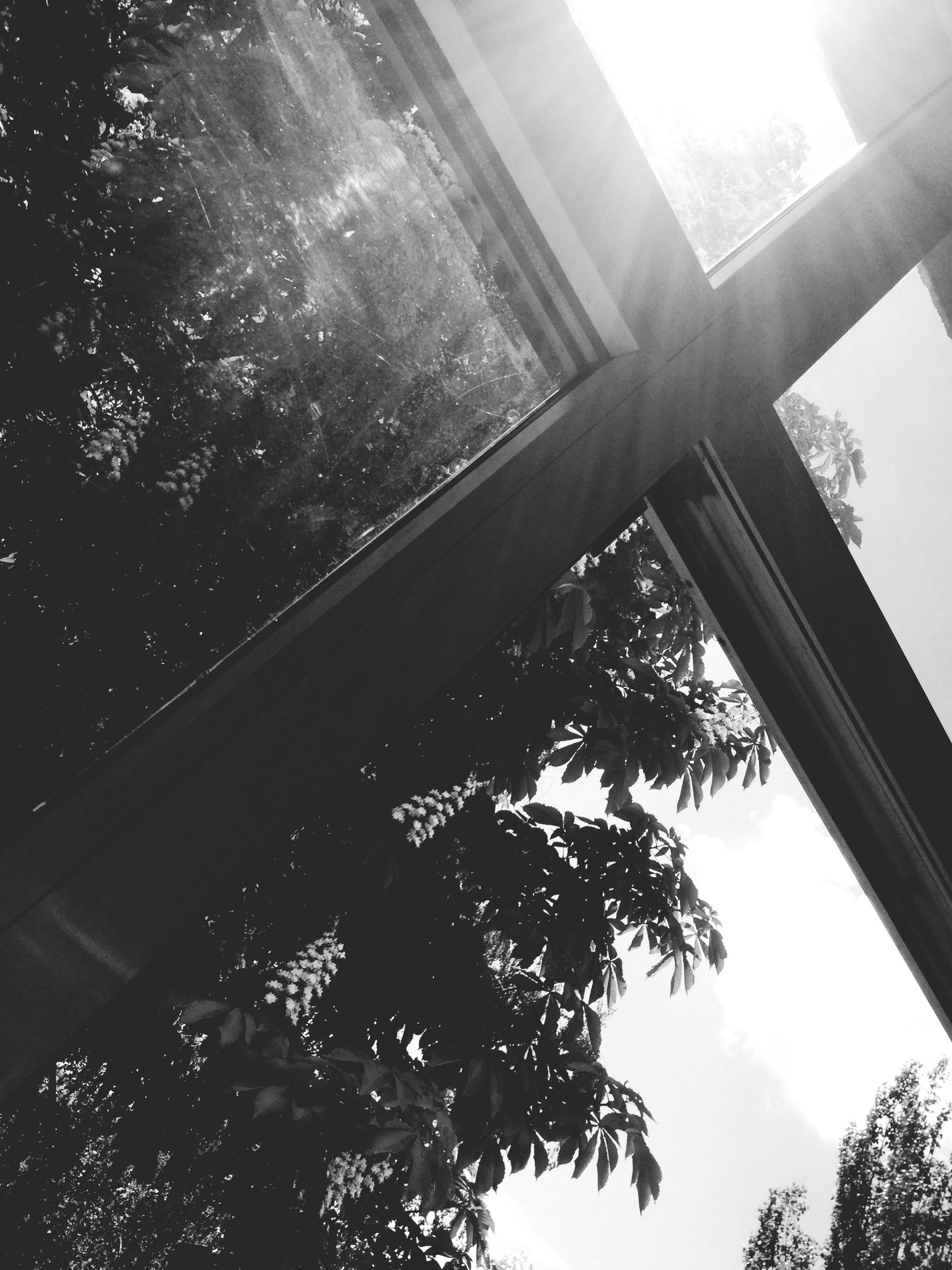 low angle view, tree, built structure, architecture, sky, sunlight, branch, growth, sunbeam, no people, sun, day, building exterior, nature, silhouette, outdoors, clear sky, lens flare, sunny, glass - material