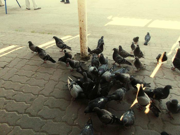 Birds perching on ground