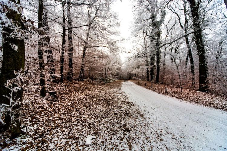 Ein Winterspaziergang auf dem Neroberg in Wiesbaden. Baum Blatt Blätter Frost Frosty Frosty Mornings Kalt Nature Naturerlebnis Naturwunder Neroberg Rauhreif Reif Wiesbaden Winter Wonderland Wintertime Winterwonderland Wood Zucker Zuckerguss