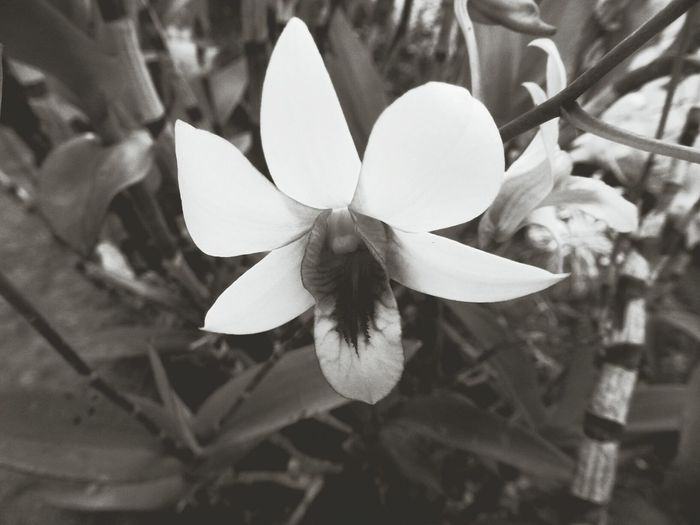 Connected With Nature Black And White Photography Flowers Nature Photography