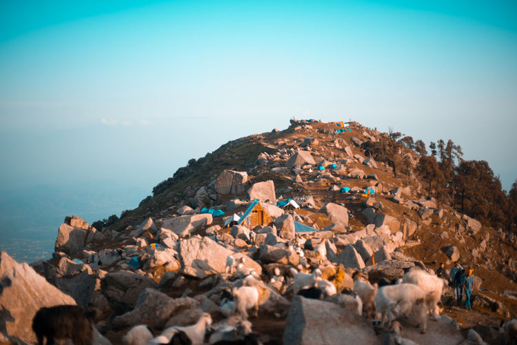 Tilt-shift image of tents and goats on mountain against sky