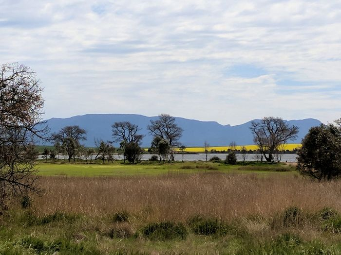 Grampian mountains and canola fields. Grampians Grampians National Park Canola Flowers Canola Crops  Canola Country Pasture Yellow Flower Yellow Tree Mountain Water Rural Scene Sky Landscape Cloud - Sky Grass Tranquil Scene Countryside Mountain Range Scenics Calm Tranquility